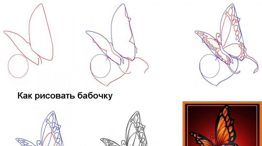 Cara Menggambar Kupu Kupu Secara Bertahap Dengan Pensil Kelas Master Cara Menghias Kupu Kupu Dengan Pensil Warna
